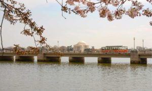 Old Town Trolley Tours with a View of Jefferson Memorial
