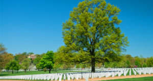 View of a gravesite with beautiful trees at the Arlington National Cemetery
